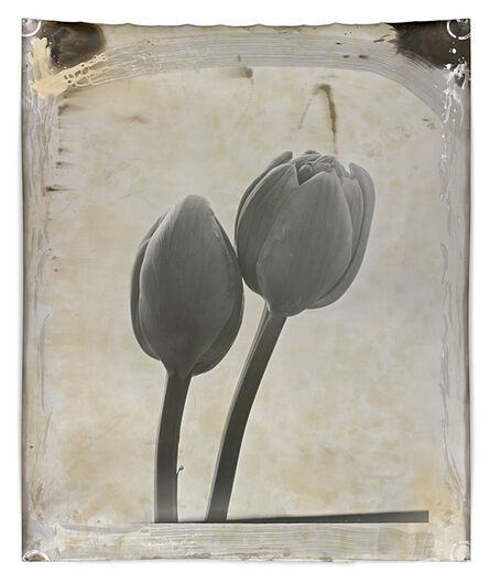 Jeff Cowen, 'Nature Morte 15', 2012