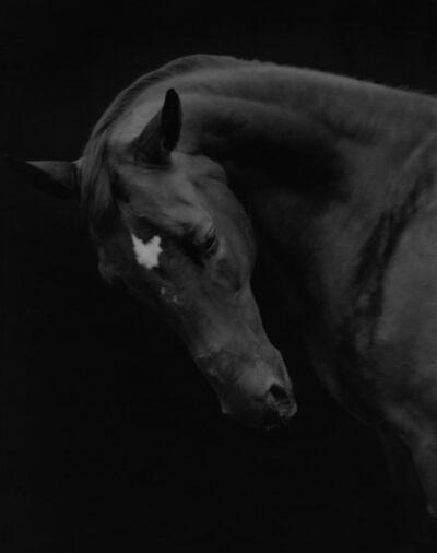 Sheila Rock, 'Horse #72, ', ca. 1999