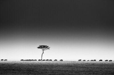 Majed Alzaabi, 'Migration'