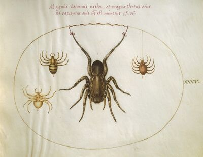 Joris Hoefnagel, 'Animalia Rationalia et Insecta (Ignis):  Plate XXXV', ca. 1575/1580