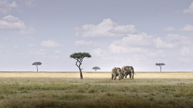 David Burdeny, 'Elephant Pair, Amboseli, Kenya', 2019