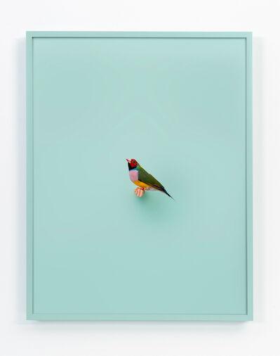 Daniel Handal, 'Lady Gouldian Finch (Mint)', 2017