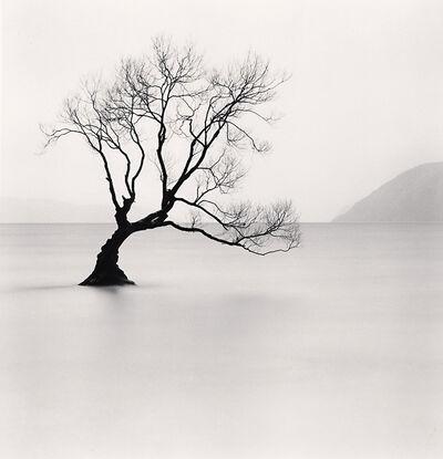 Michael Kenna, 'Wanaka Lake Tree, Study 1, Otago', 2013