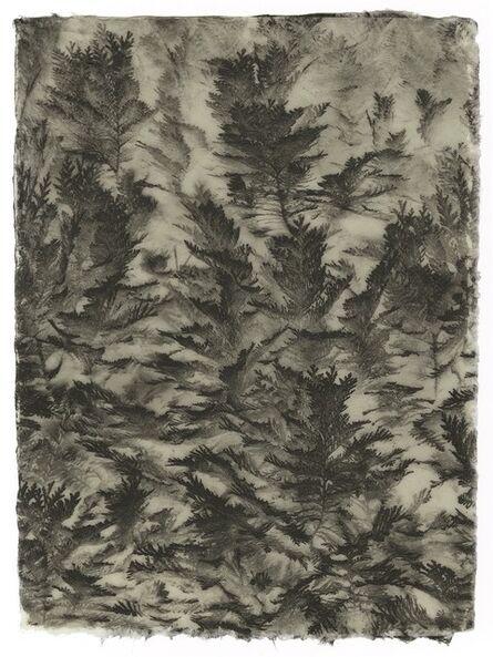 Gregor Törzs, 'Thuja', 2020