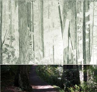 Gabriela Albergaria, 'Redwoods 574', 2016-2019