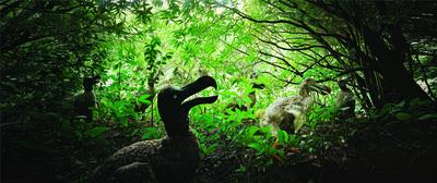 Harri Kallio, 'Combo Nature Preserve #6, Mauritius', 2004