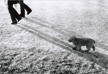 Walter Schels, 'Dog #6'