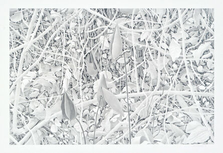 Bill Richards, 'Milkweed and Branches', 2010