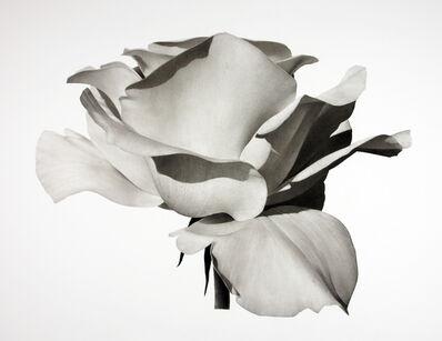Jonathan Delafield Cook, 'Rose III ', 2021