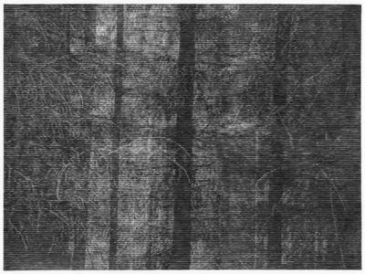 Christiane Baumgartner, 'Wald bei Colditz II', 2014