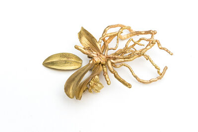 Jo Coupe, 'Rarefied (Phalaenopsis lobii)', 2008