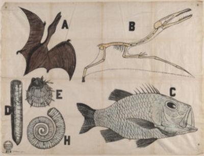 "'Untitled (Working Men's Educational Union textile length, ""Jurassic Fauna & Cretaceous""), British', 1850-1860"