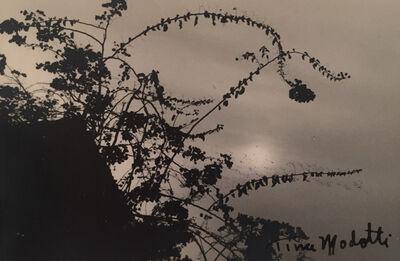 Tina Modotti, 'Untitled (Flowers)', 1926