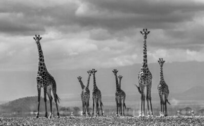 David Yarrow, 'Giraffe City', 2016