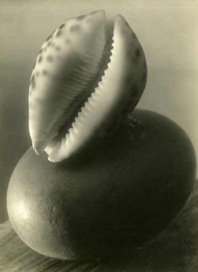 Josef Sudek, 'Untitled (Sea shell stillife)', 1950-1954