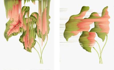 Andrea Wolf, 'Caladium Bicolor, vars. 001, 002', 2020