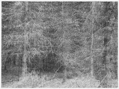 Christiane Baumgartner, 'Wald bei Colditz IV', 2014