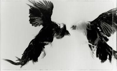 Hiro, 'Game Fowl (27084-50), Maryland', 1988
