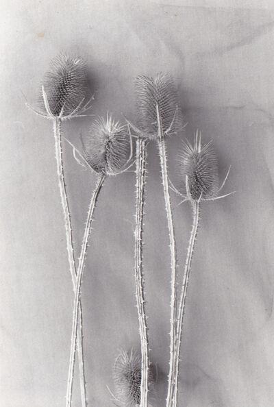 Gil Hanly, 'Dress Making (11.8)', 1970-1990