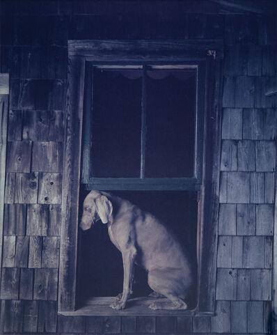 William Wegman, 'Open Window', 20th -21st Century