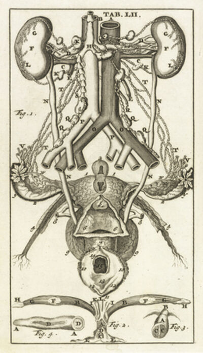 Steven Blankaart, 'Tab. LII', 1695
