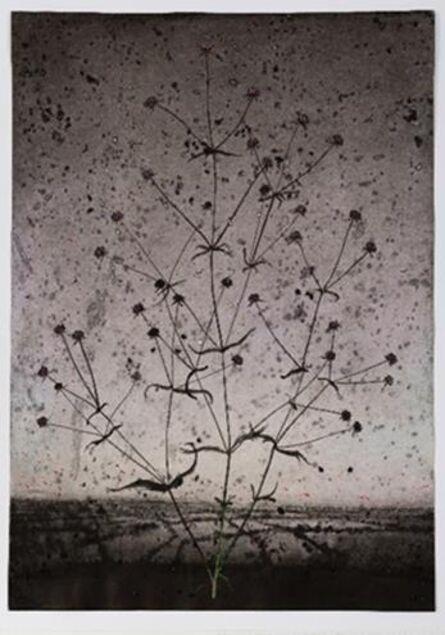 Michael Canning, 'Dust Secrets X', 2018-19