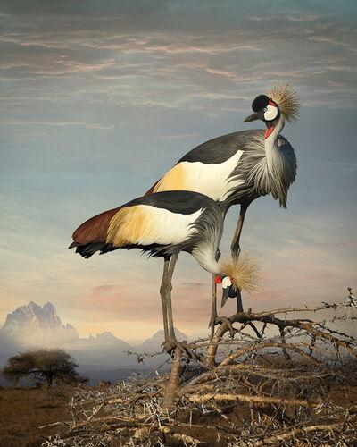 Cheryl Medow, 'Grey Crowned Cranes', 2014