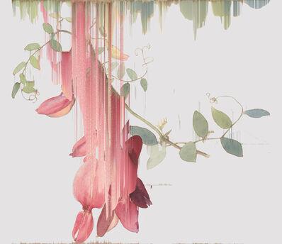 Andrea Wolf, 'Lathyrus Splendens, var. 013', 2020