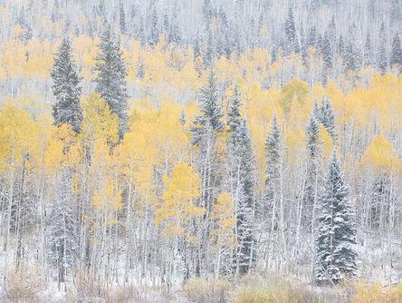 Stephen King 金昌民, 'Autumn Snow', 2017