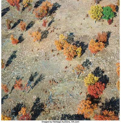 Terry Evans, 'Black Oak Savanna, Pembroke Savanna, Near Hopkins Park, Kankakee County, Illinios, October 23', 2003