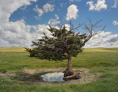 Andrew Moore, 'Homesteaders Tree, Cherry County, Nebraska', 2011