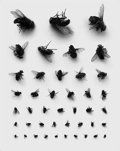 Rinat Voligamsi, 'Check your eyesight', 2008