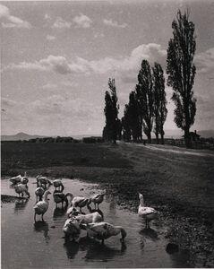 André Kertész, 'Untitled', 1917