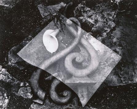 Edward Weston, 'Rubbish Pile - and Lily', 1939