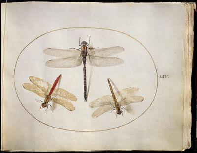 Joris Hoefnagel, 'Animalia Rationalia et Insecta (Ignis):  Plate LIV', ca. 1575/1580