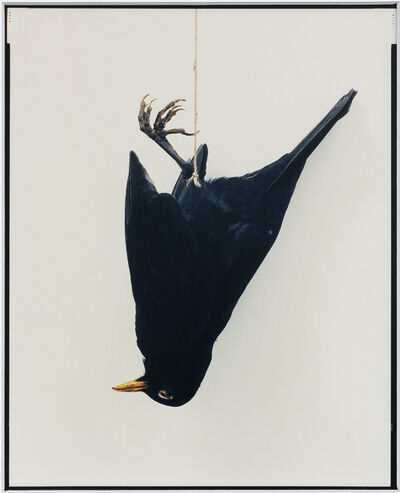 Eric Poitevin, 'Sans titre (Oiseaux)', 2012-2020