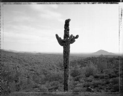 Mark Klett, 'Bullet Riddled Saguaro '