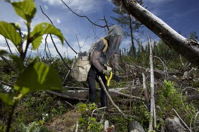 Rita Leistner, 'Tree Planter Maria Agueci, British Columbia, Canada Coast Range Contracting Spring Plant', 2016