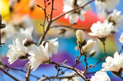 Susumu Kishihara, 'Magnolia', 2012