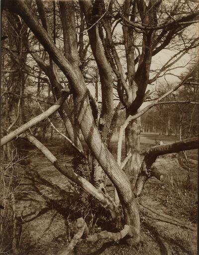 Eugène Atget, 'Arbre, St. Cloud', 1922