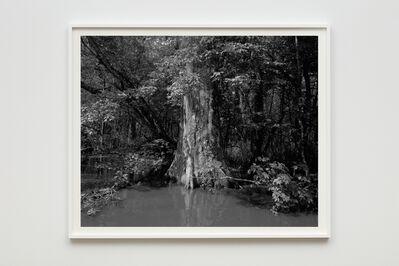 Dawoud Bey, 'Swamp', 2019