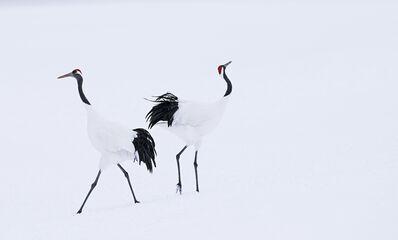 David Yarrow, 'Hokkaido', 2017