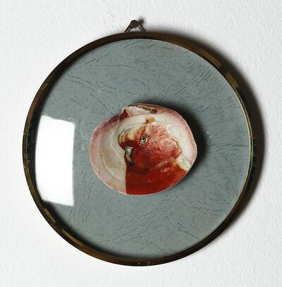 Léopold Rabus, 'Sans titre (perruche sur coquillage)', 2011