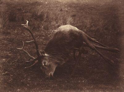 Captain Horatio Ross, 'Dead Stag', 1857