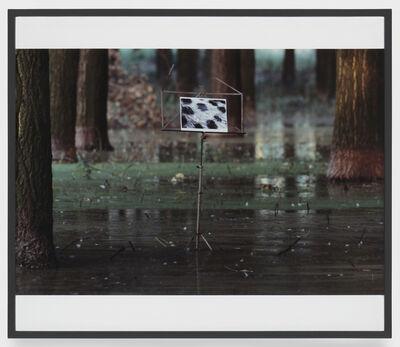 Lothar Baumgarten, 'Der Jaguar kann niemals Seine Flecke verlieren', 1970