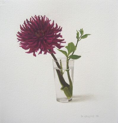 Donald Campbell, 'Zinnia in a glass'