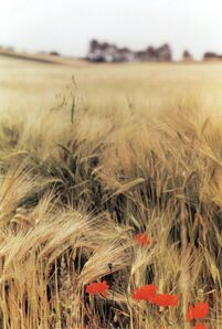 Ralph Gibson, 'Wheat Field, Burgundy', 1993
