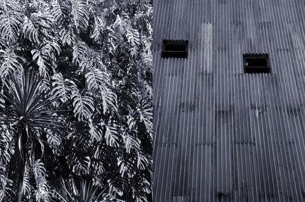 Veronika Kellndorfer, 'Casa do Benin,Philodendron', 2016