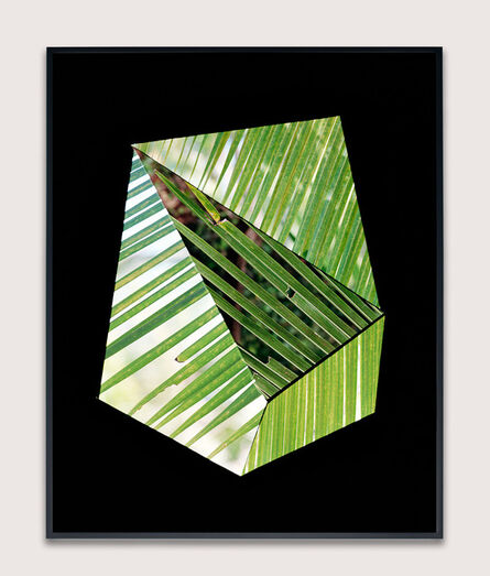Hannah Whitaker, 'Frond Screen (Positive)', 2015