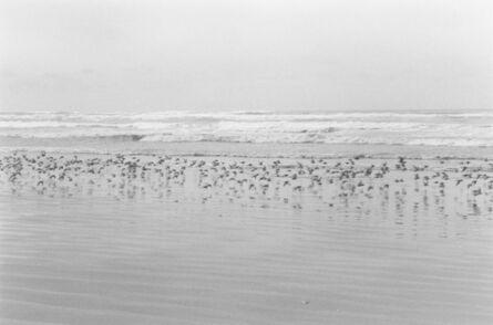 Robert Adams (b.1937), 'North Beach Peninsula, Pacific County, Washington', 2008